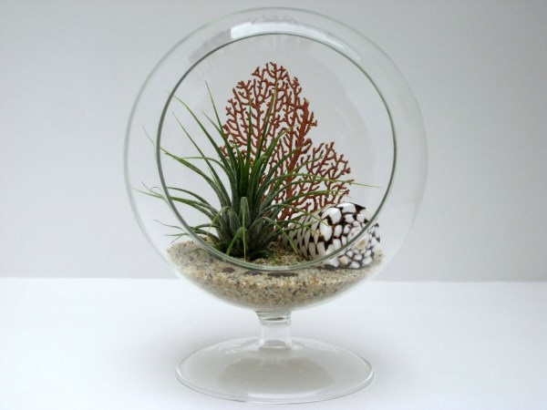 Footed Glass Bowl Air Plant Terrarium Ideas with Shell