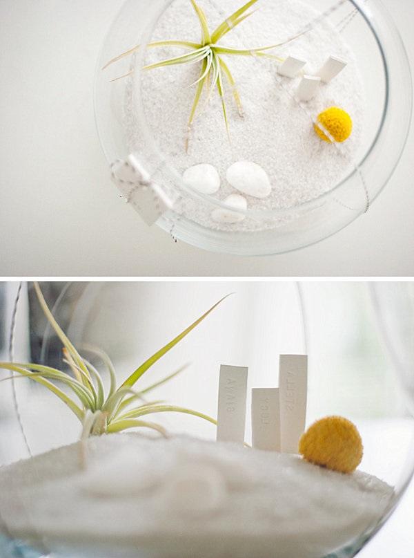 Modest Air Plant Terrarium Gift Idea