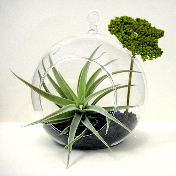 DIY Air Plant Terrarium Design with Yarrow