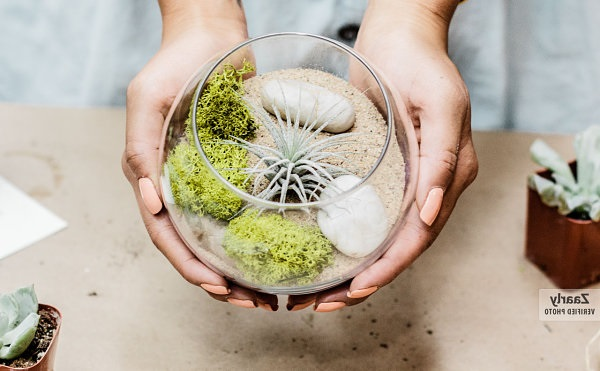 DIY Air Plant Terrarium Ideas with Sand and Rocks