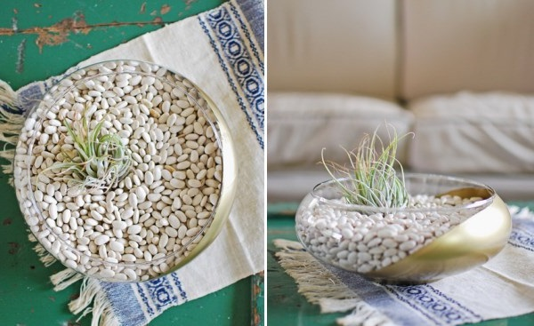 DIY Air Plant Terrarium with Navy Beans by Lauren Donaldson