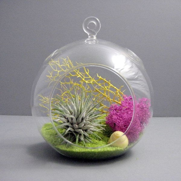 Etsy Shop Sea Asters - Astonishing Air Plant Terrarium
