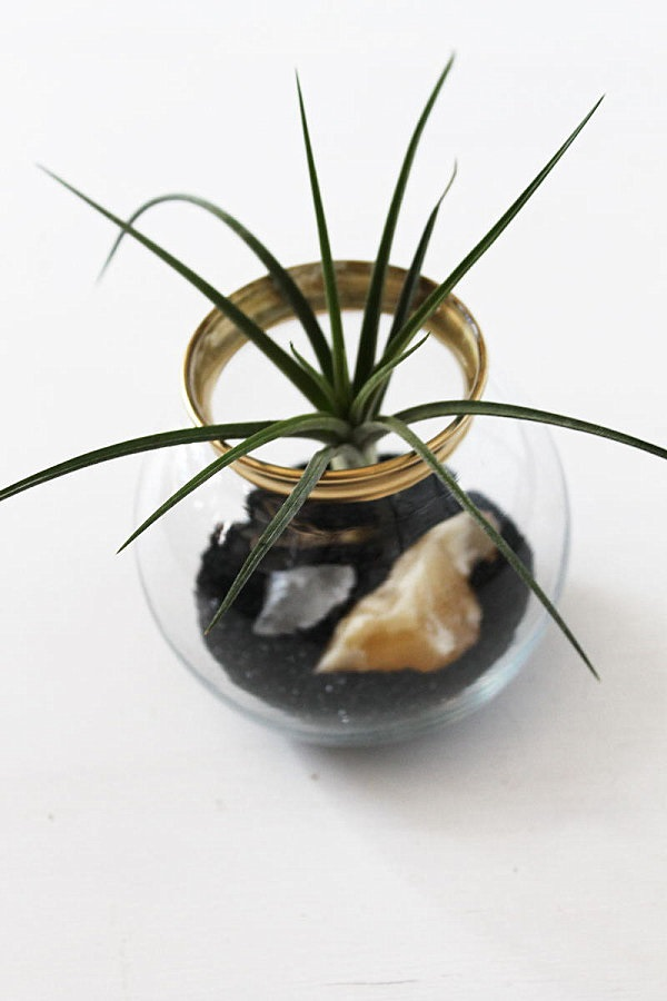 Glass Bowl Air Plant Terrarium with Special Container and Minerals