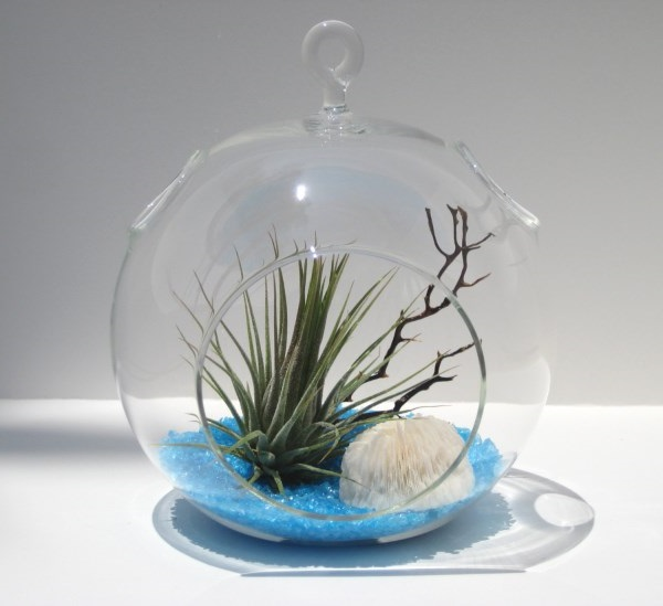 Hanging Air Plant Terrarium Decoration with Blue Recycled Glass